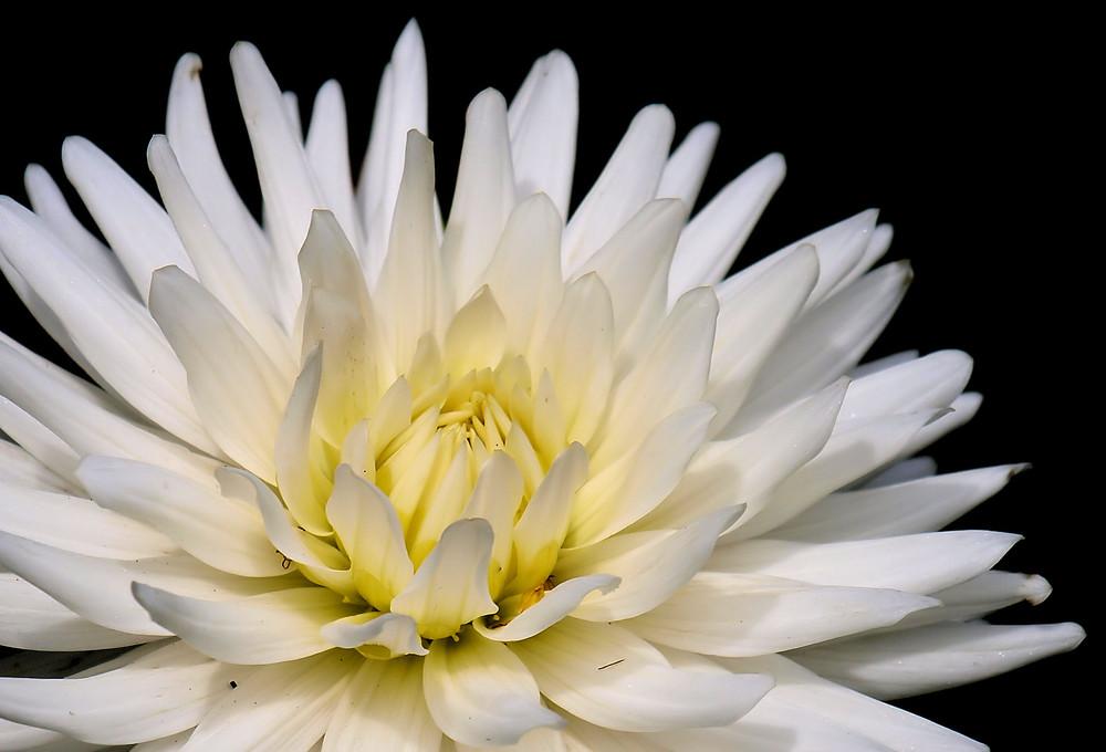 fleur b