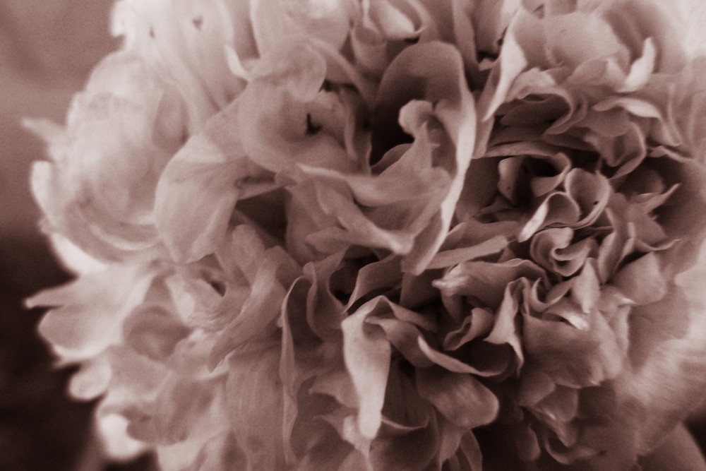 fleur....