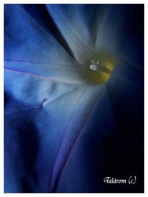 Fleur bleu dans la nuit
