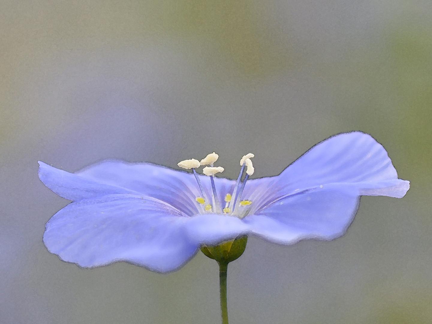Fleur bleue Aquarelle
