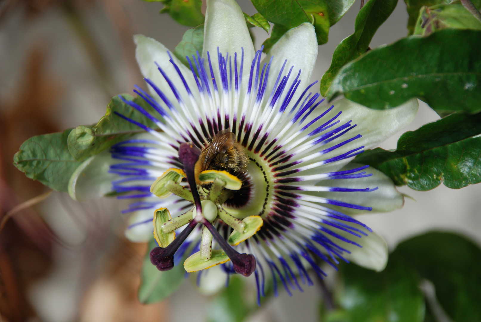 fleur bourdonnante