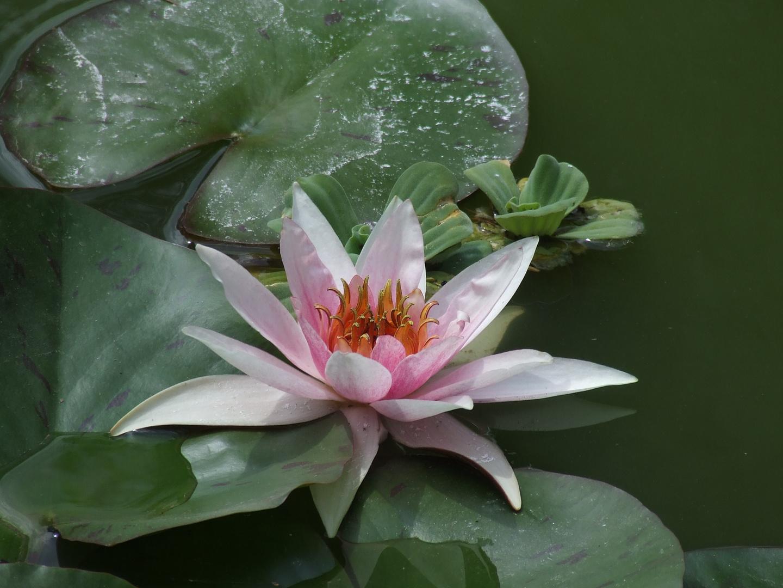 fleur d eau..