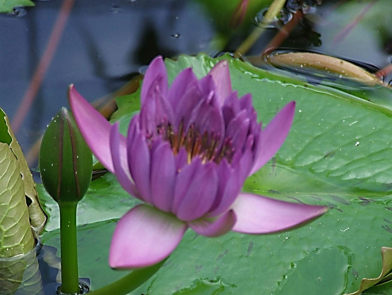 fleur d eau