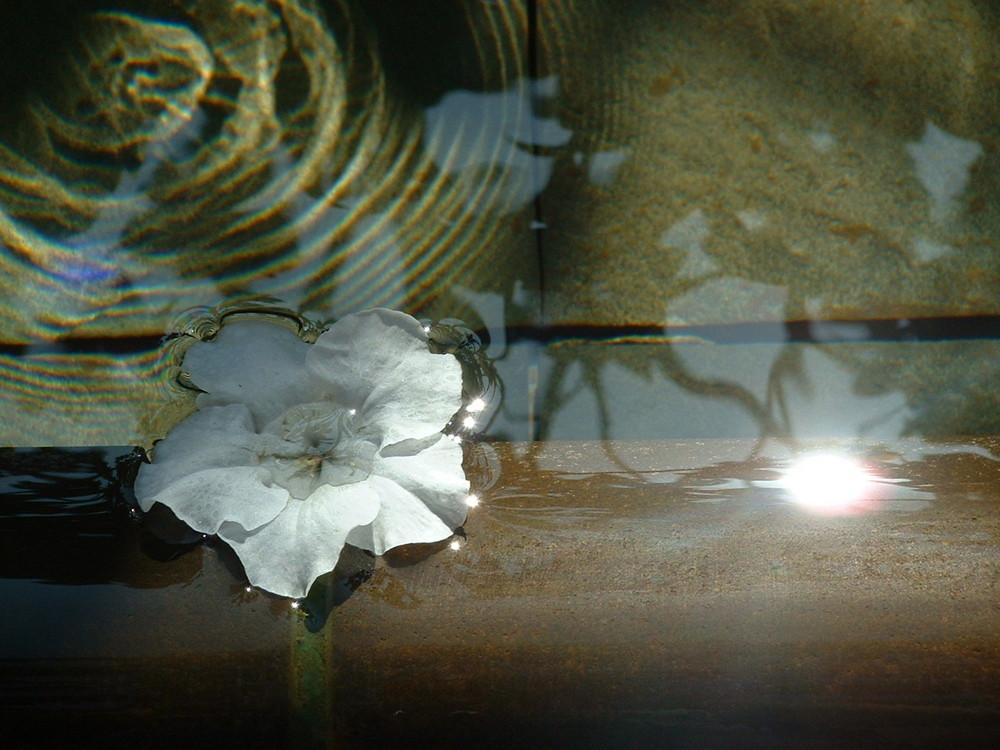 Fleur dans une fontaine (Los Angeles)
