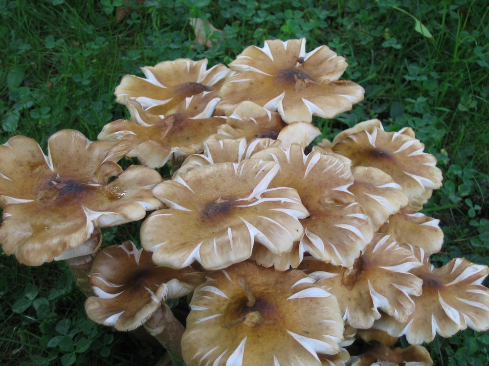 fleur d'automne