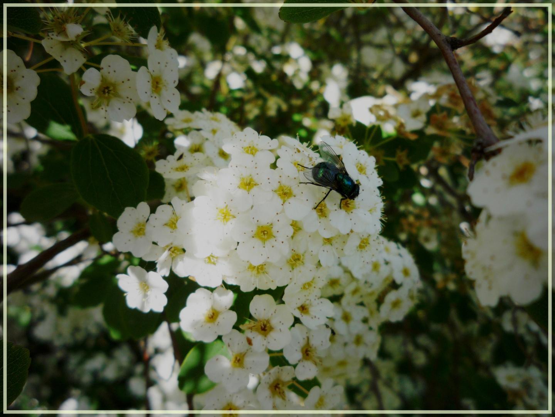 - Fleur -