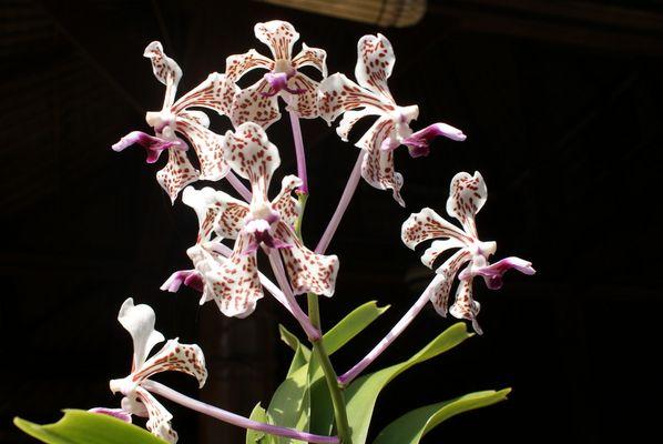 fleur de bali