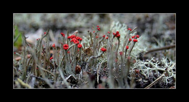 fleur de bisous