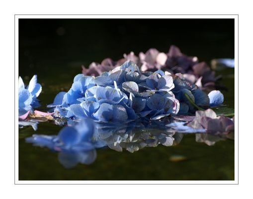 Fleur de Bretagne