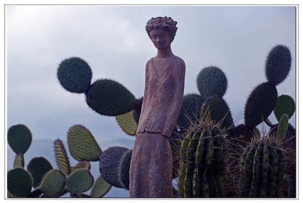 fleur de cactus?