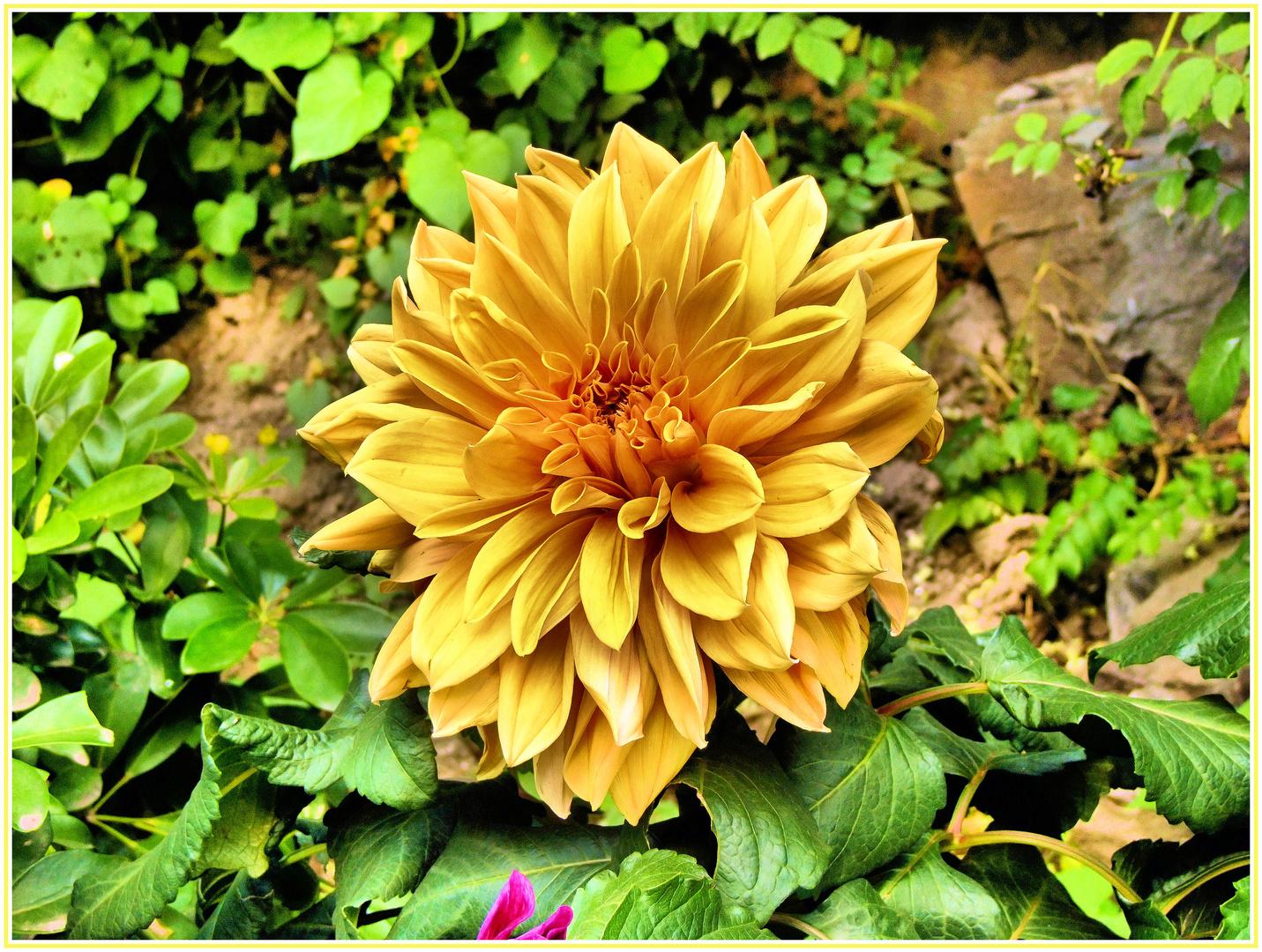 Fleur de Chine