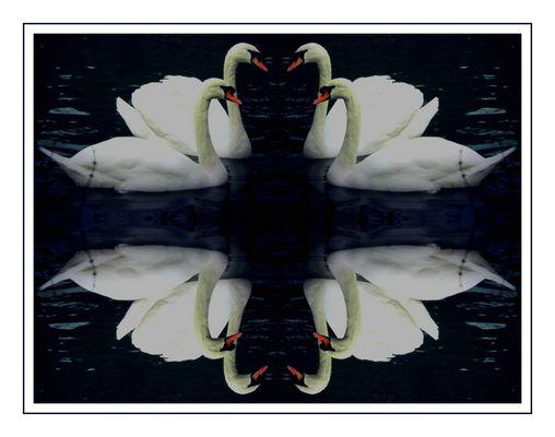 ***Fleur de cygnes***