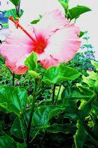 Fleur-de-Fairfax