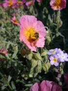 fleur de fleur