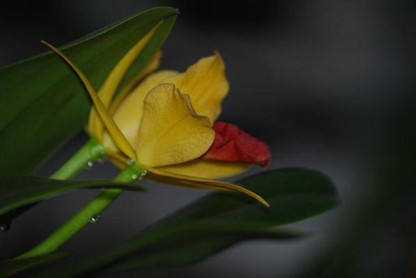 fleur de flou..