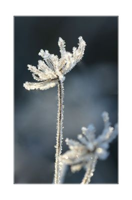 Fleur de glace 2