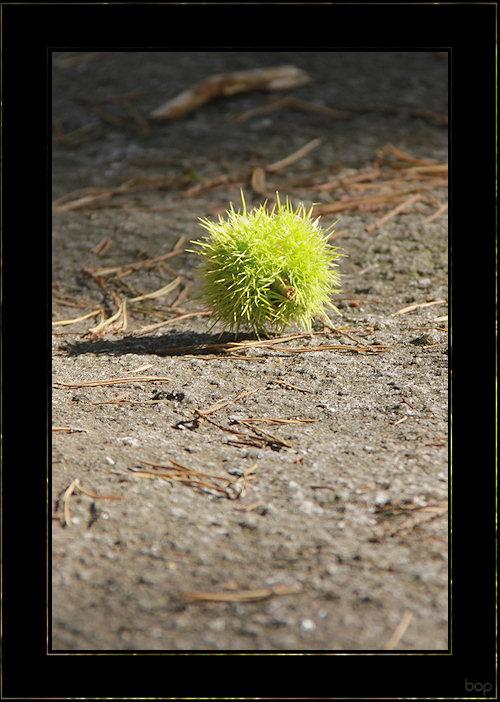 Fleur de granit