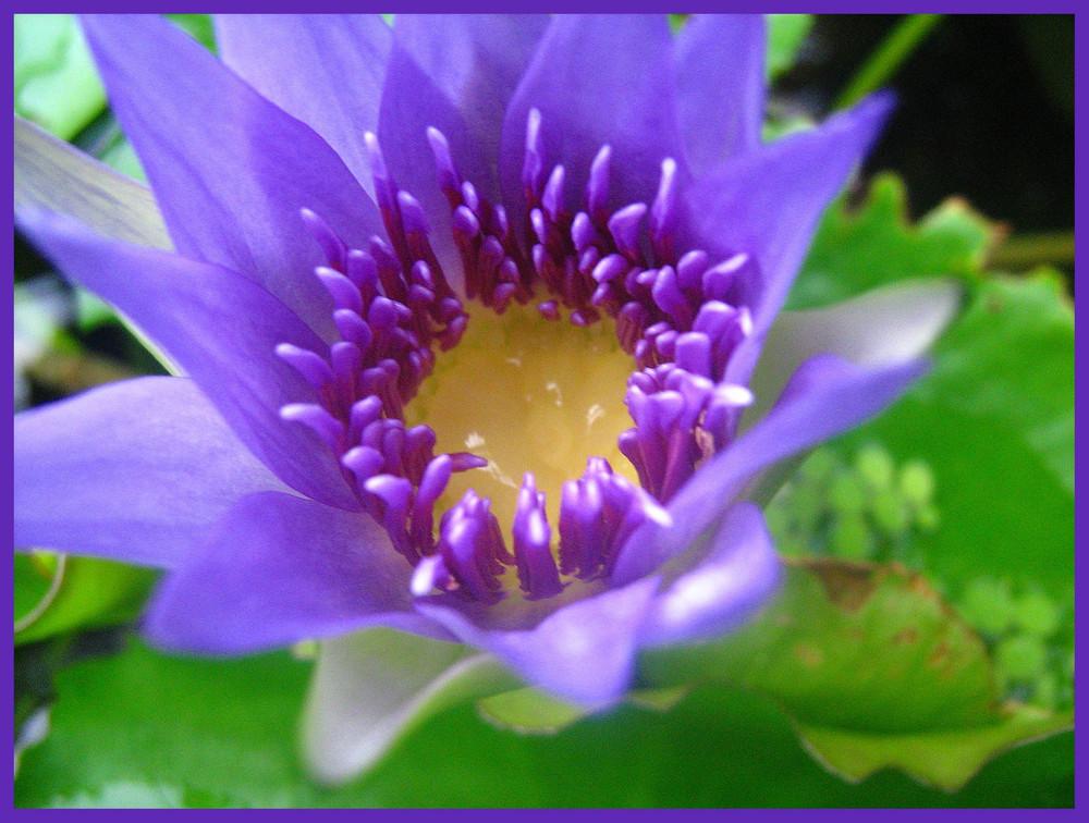 Fleur de lotus photo et image macro nature macro orchid es nature images fotocommunity - Image fleur de lotus ...