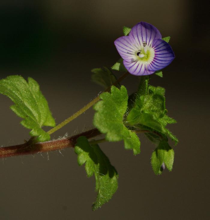 fleur de mur