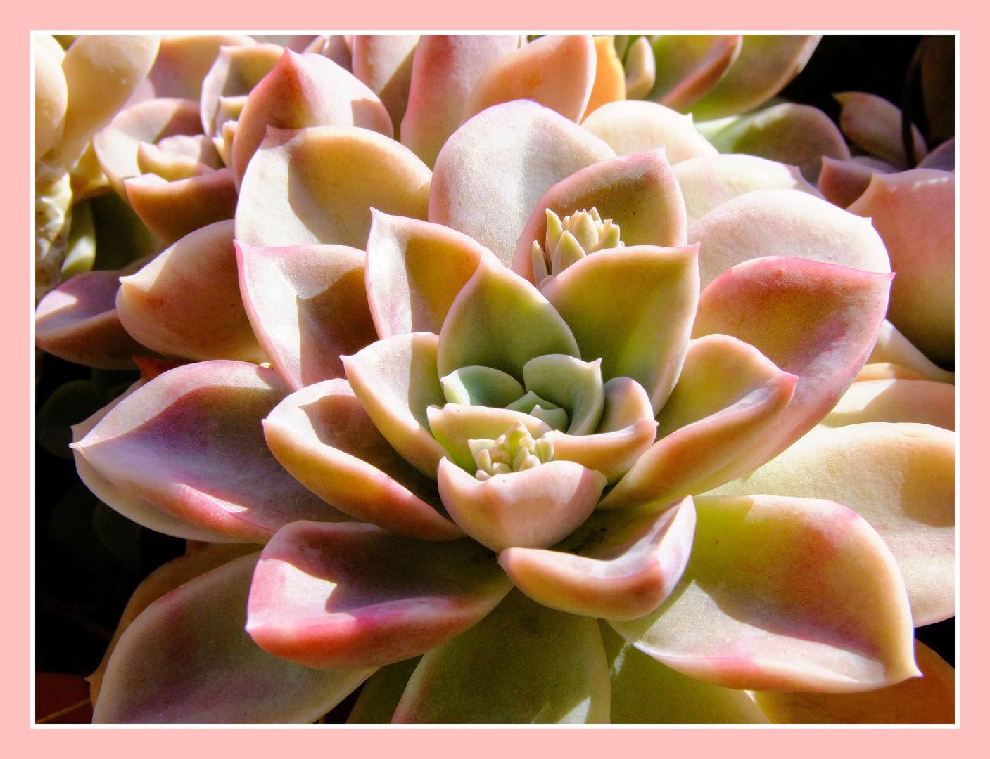 Fleur de porcelaine...