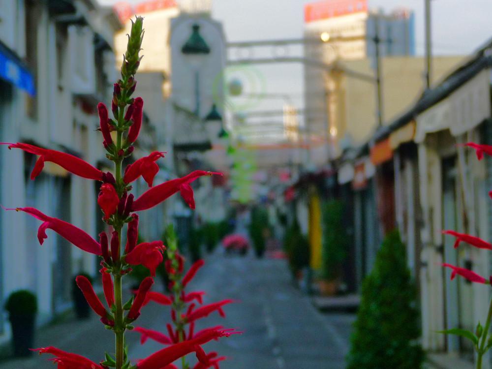 Fleur de St Ouen