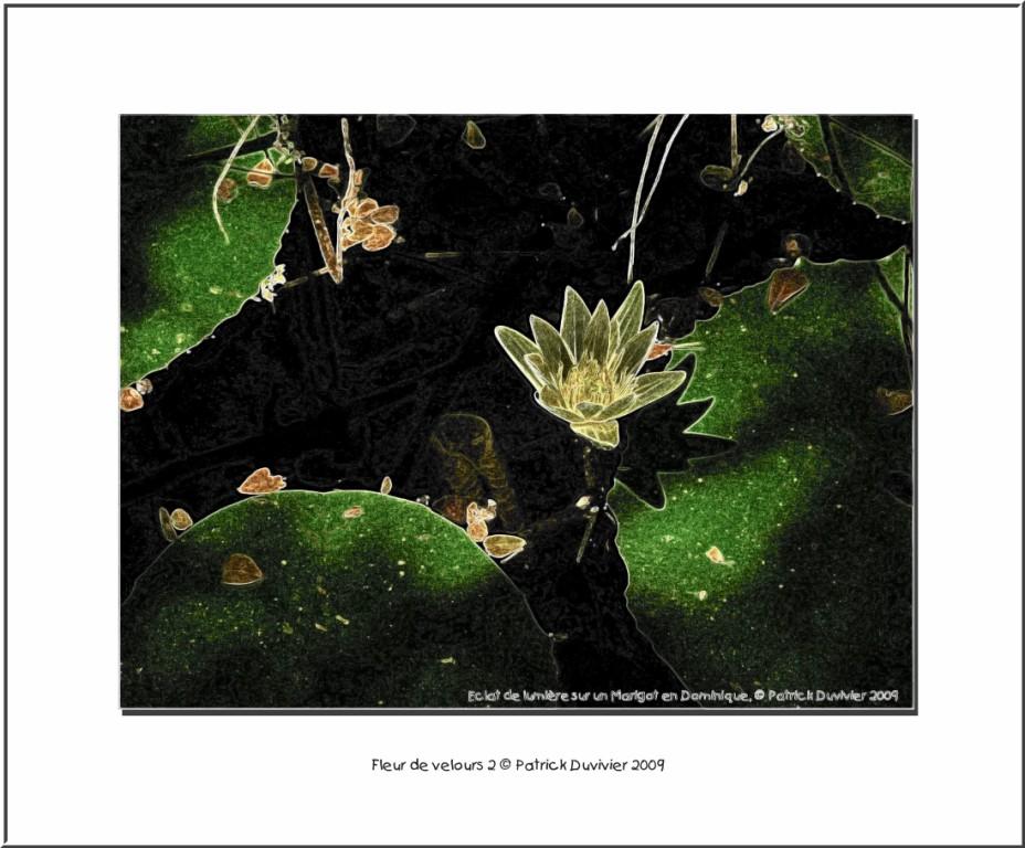 Fleur de velours 3