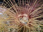 fleur des mers