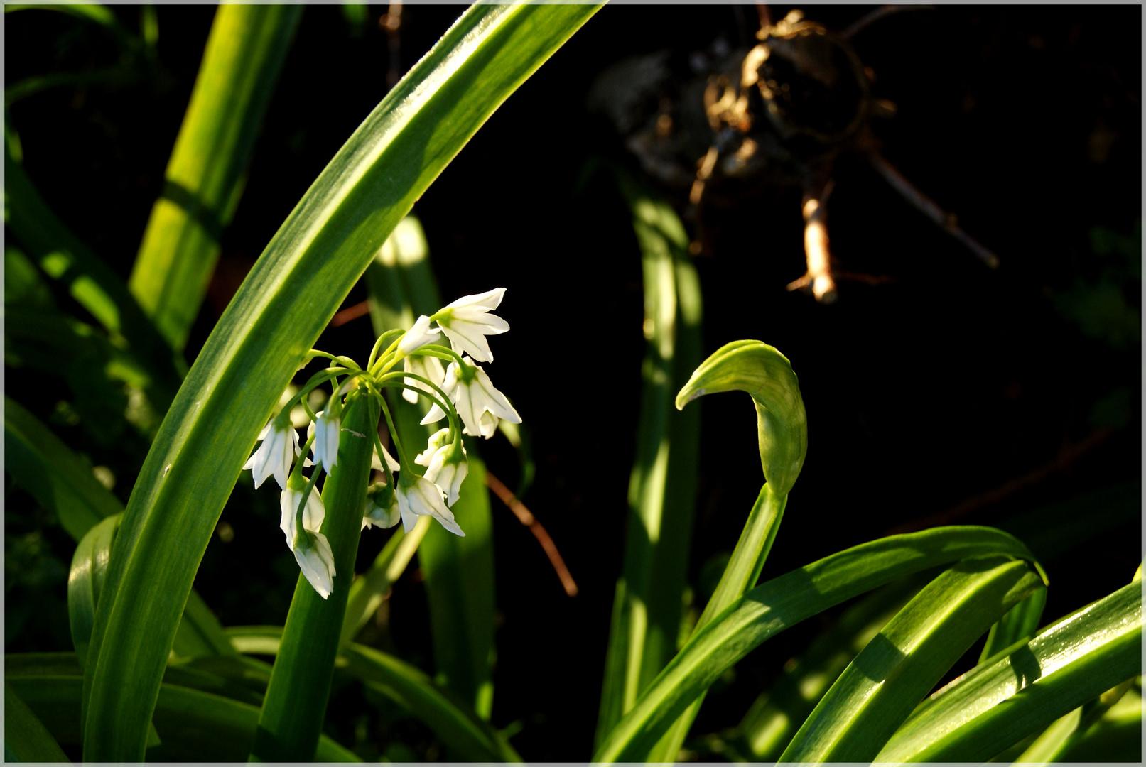 Fleur d'hiver...
