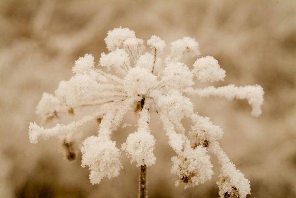 Fleur d''hiver