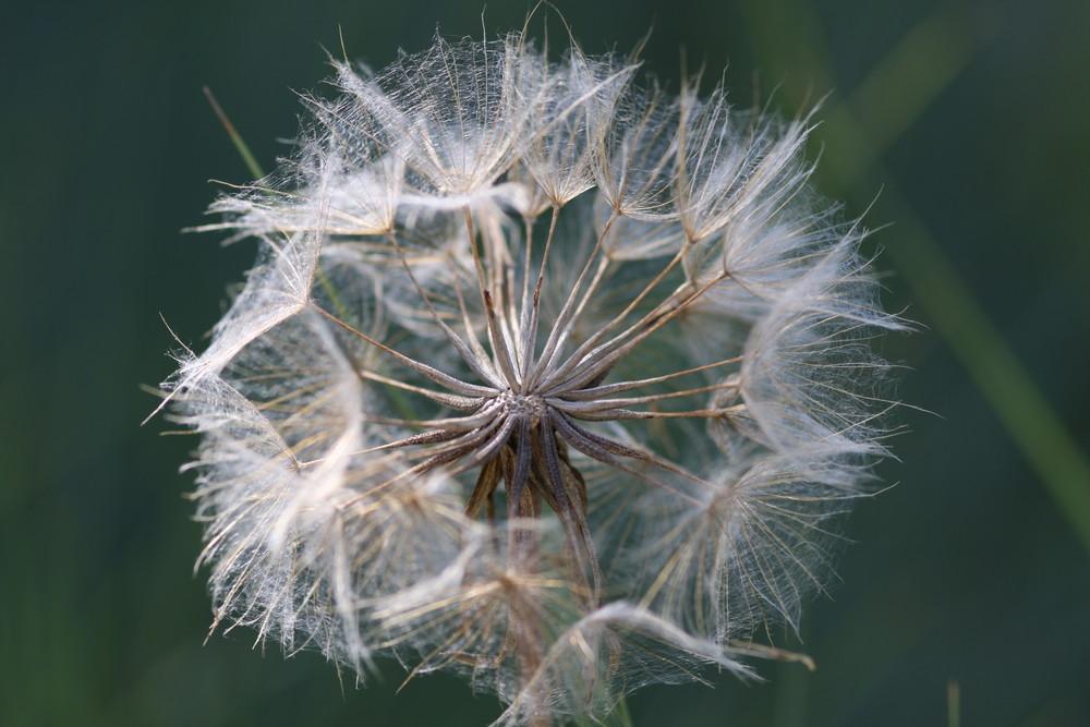 fleur du larousse