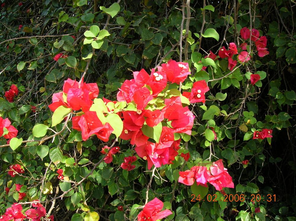 fleur du mexique