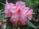 fleur du parc du chateau de trévarez