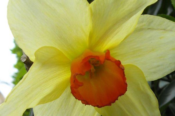 Fleur du printemps...