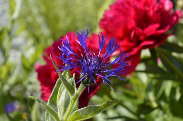 Fleur éclatante
