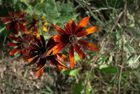 fleur en automne