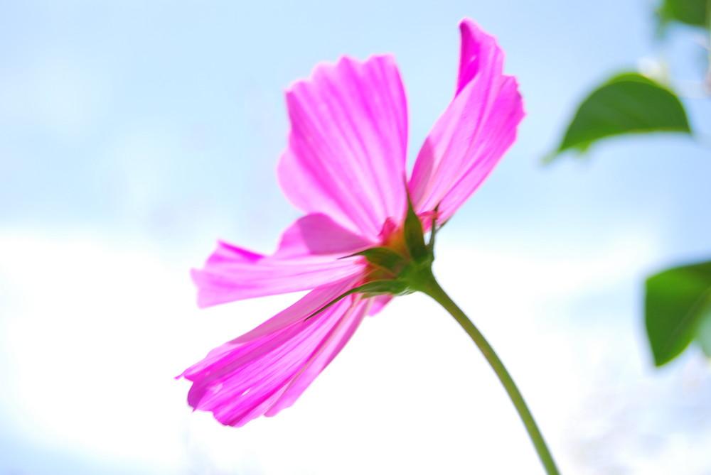 fleur en été