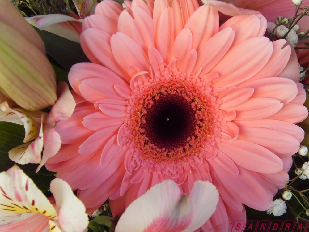 Fleur en gros plan...et du rose pour vous envoyer toute mon amitié...A vous que j'aime!!!!!