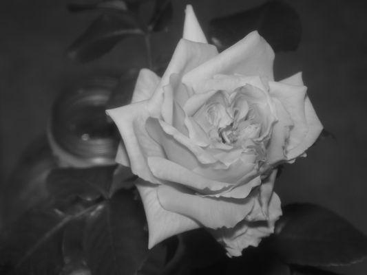 fleur en n&b
