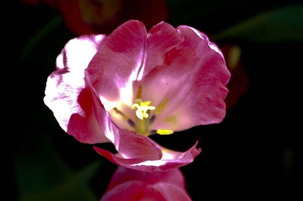 fleur en reflts