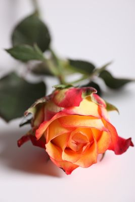 Fleur en studio