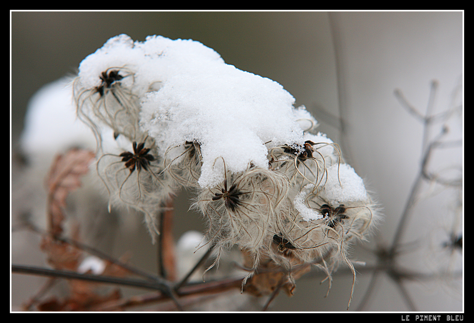 fleur enneigée