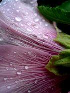 Fleur et gouttes de pluie