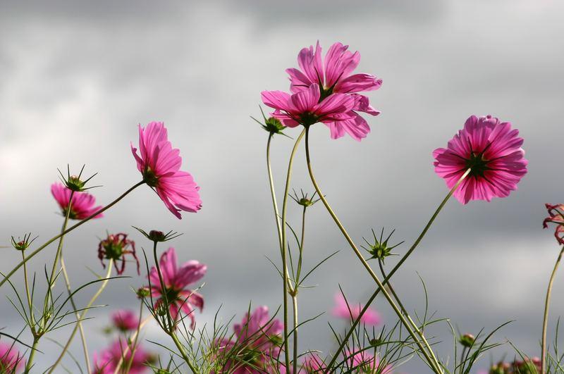fleur et orage