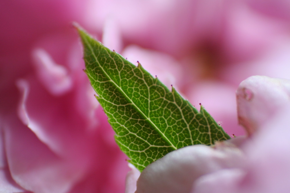 fleur-feuille