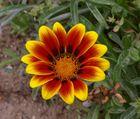 fleur gh14