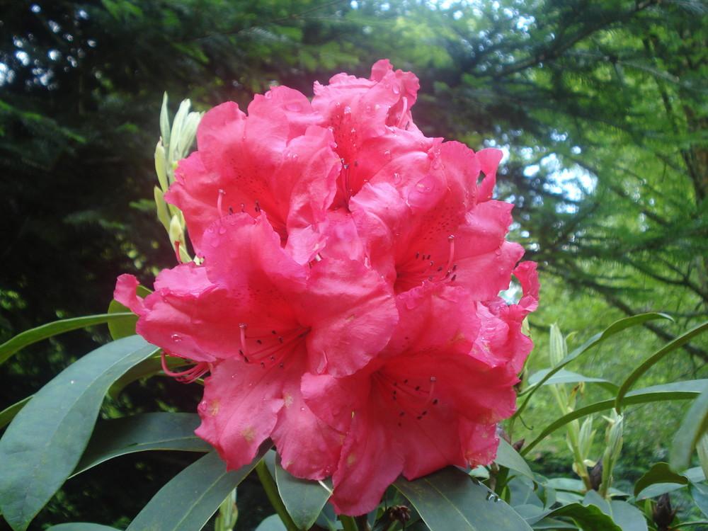 fleur jardin de trévarez