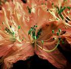 fleur magique