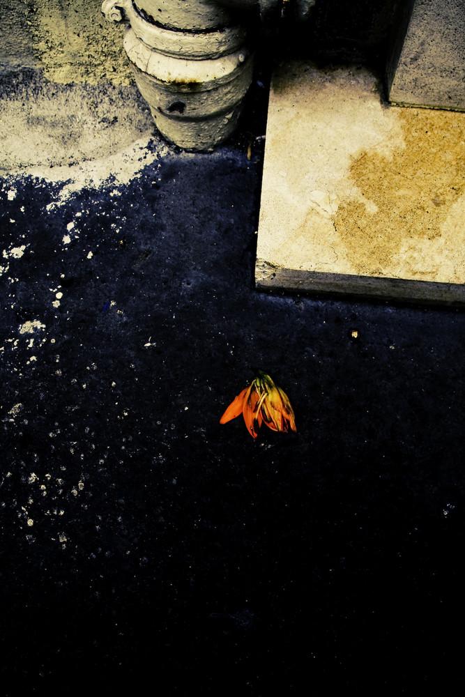 fleur morte
