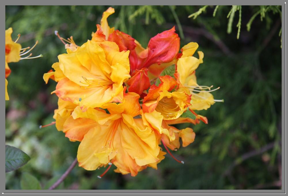fleur, oh! belle fleur.