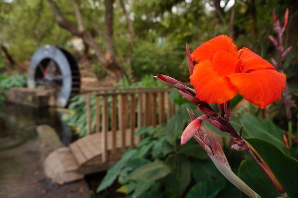 Fleur orange devant un ancien moulin